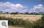 Afryka, kenijska sawanna.