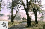 Rano wnętrze Ngorongoro spowite było tajemniczą mgłą