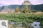Ngorongoro, wnętrze krateru